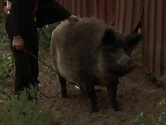 Orsay peed in farm